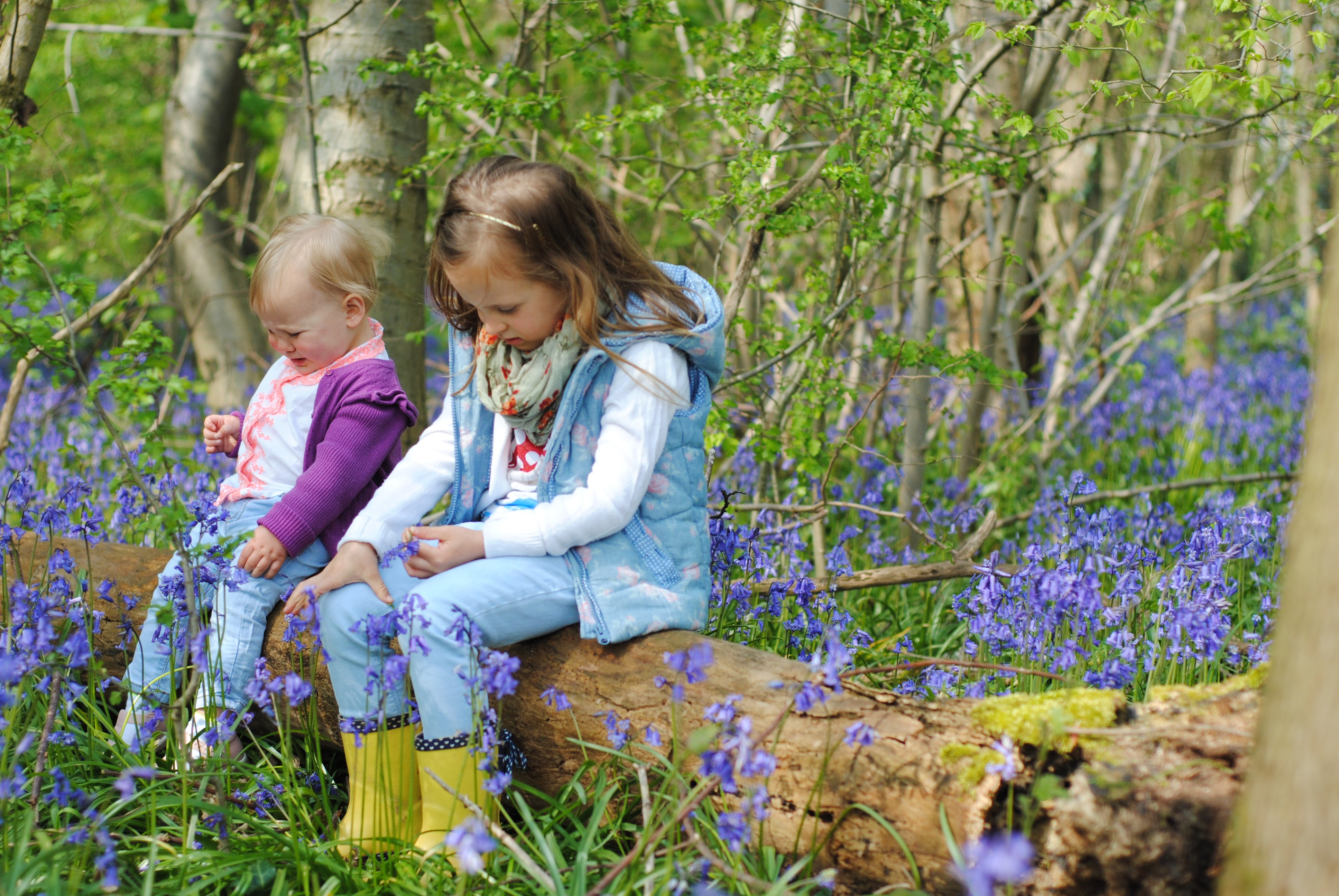Sisters Bluebells May 2016