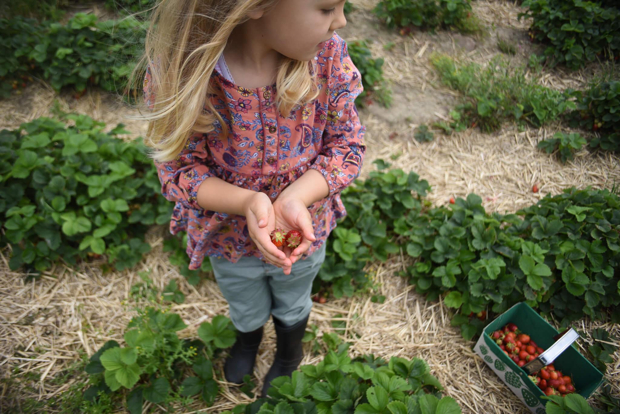 Scaddows strawberries