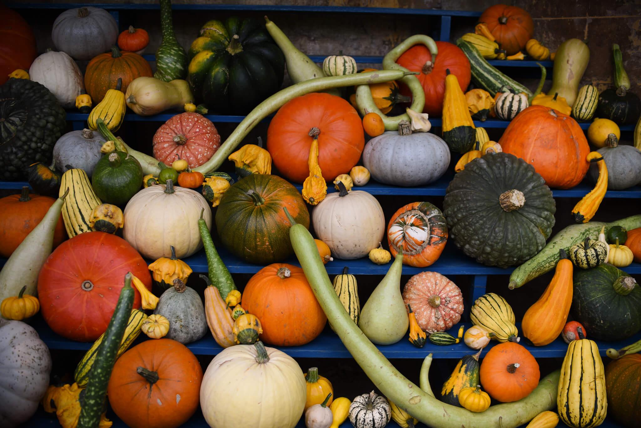 autumn bucket list cake abbey pumpkins