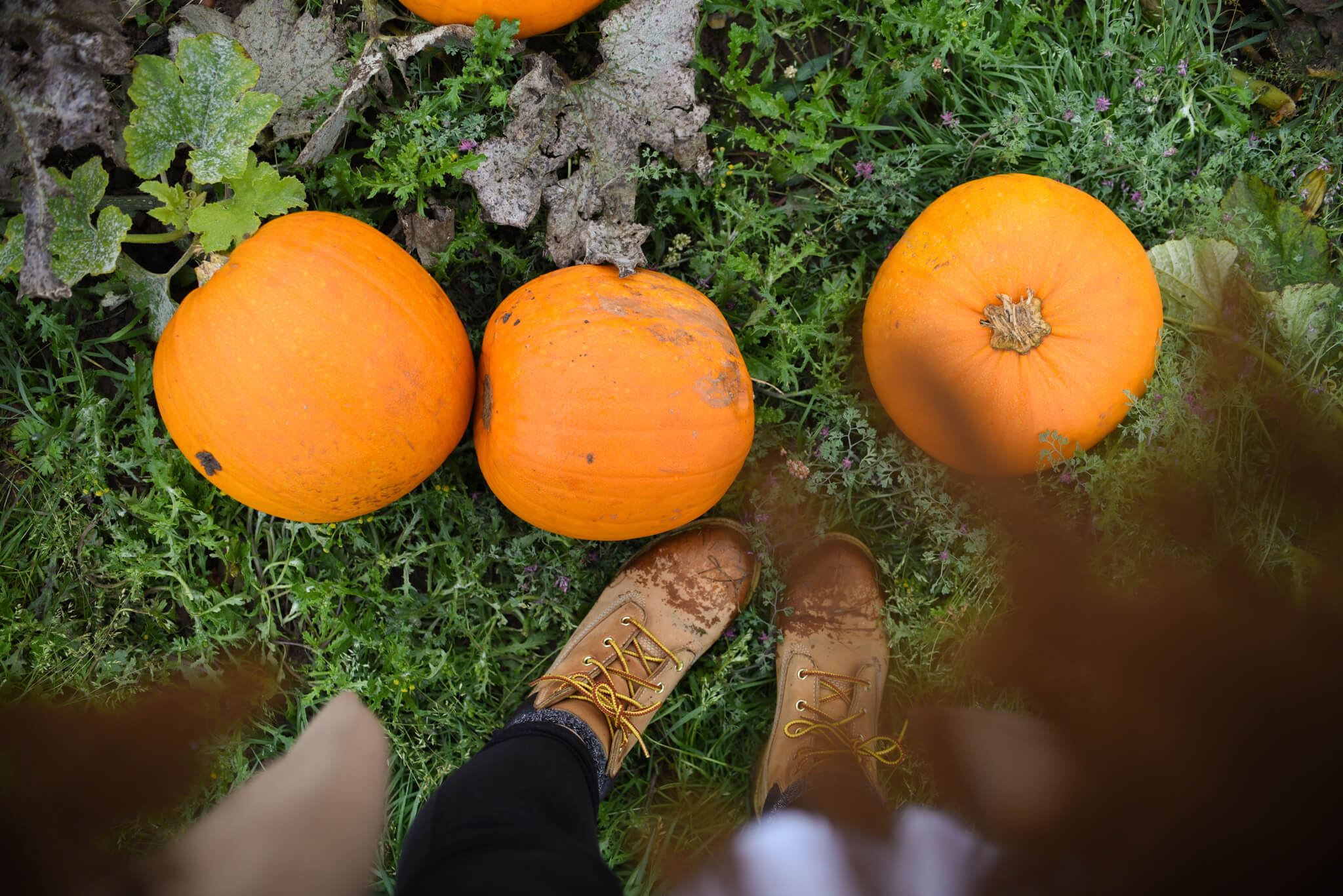 autumn bucket list pumpkins